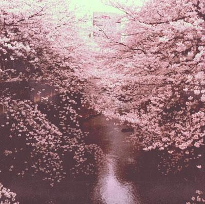 Jardin de la princesa Bianca 110411_hanami